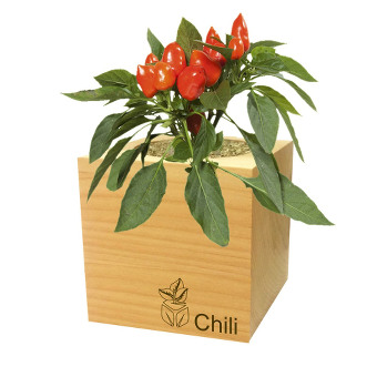 Pflanze im Holzkuebel-geschenkidee
