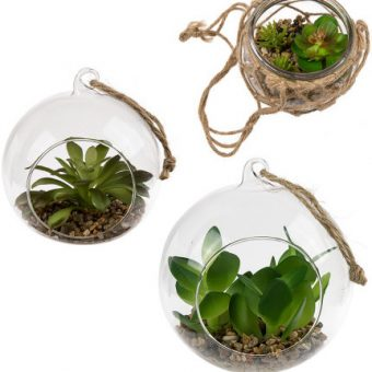 Pflanzen in Glaskugel